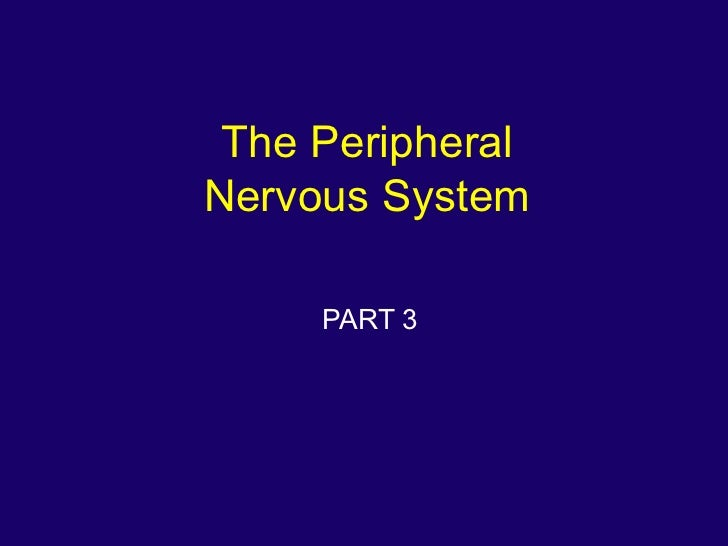 The PeripheralNervous System     PART 3