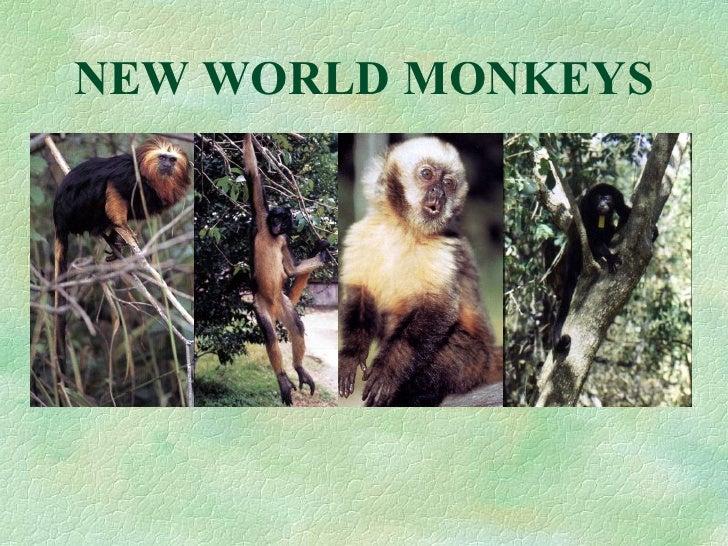 233 newworldmonkeys