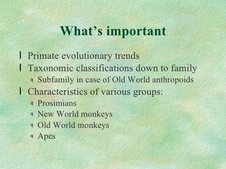 233 what are primates