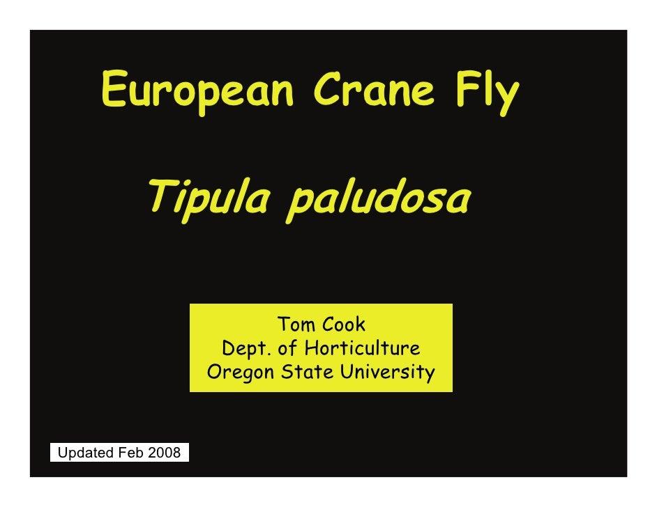 European Crane Fly            Tipula paludosa                            Tom Cook                     Dept. of Horticultur...