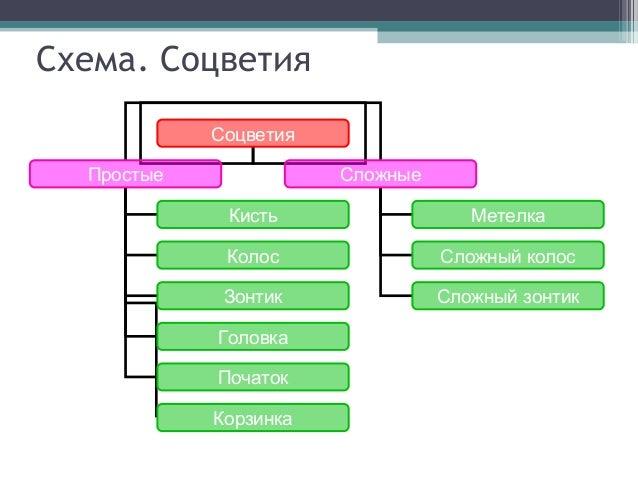 Схема. Соцветия Соцветия