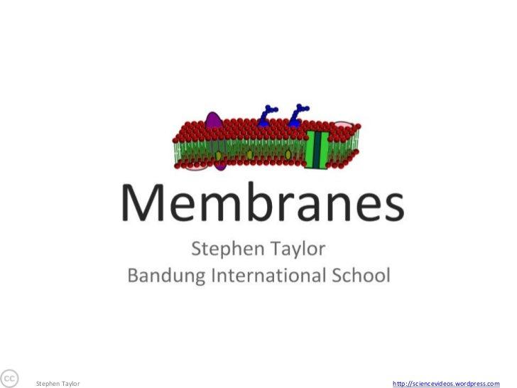 24 membranes-1224991827782369-8 (2)