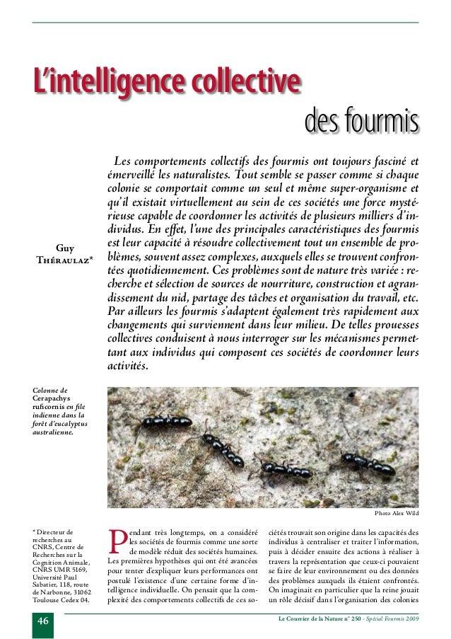 L'intelligence collective  Guy Théraulaz*  desfourmis  Les comportements collectifs des fourmis ont toujours fasciné et é...