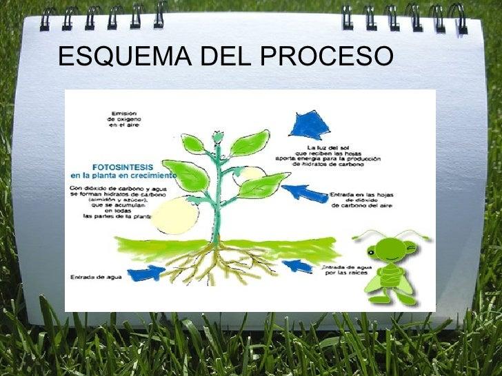 La nutrici n de la plantas - Cosas sobre las plantas ...