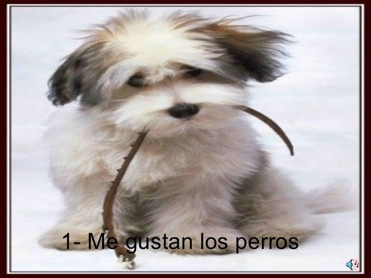 1- Me gustan los perros