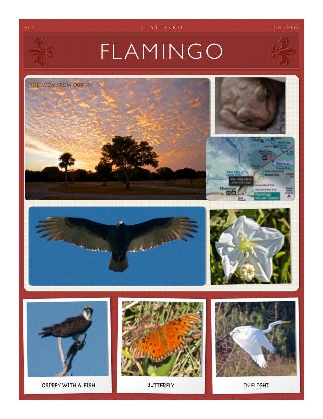 25 flamingo and keys