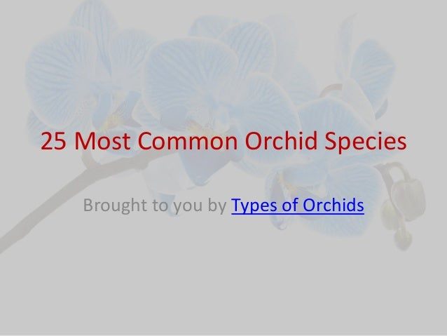 25 most common orchid species