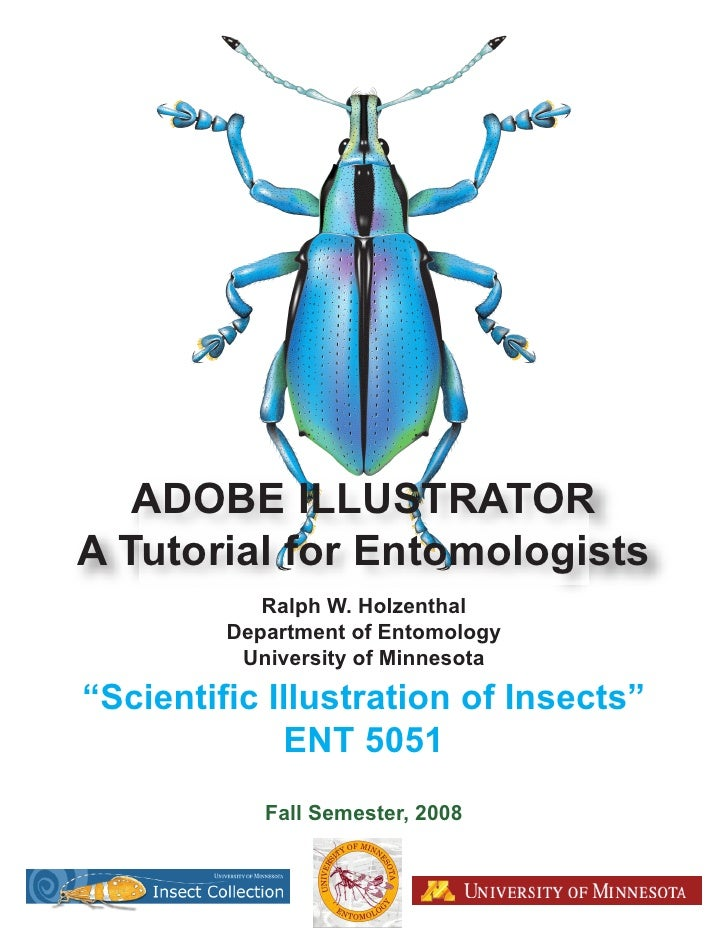 ADOBE ILLUSTRATOR A Tutorial for Entomologists             Ralph W. Holzenthal          Department of Entomology          ...