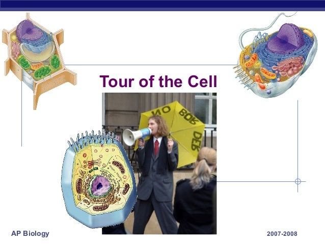 AP Biology 2007-2008 Tour of the Cell