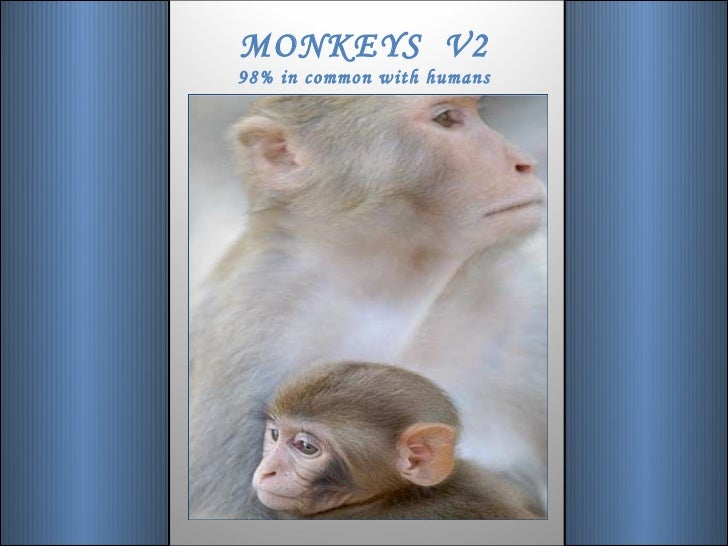 MONKEYS  V2 98% in common with humans