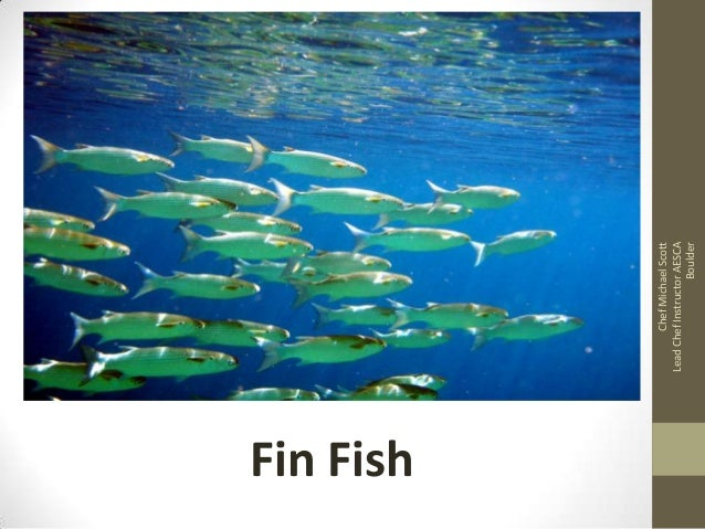 Fin Fish Chef Michael Scott Lead Chef Instructor AESCA Boulder
