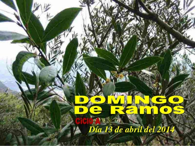 DOMINGO DE RAMOS. CICLO A. DIA 13 DE ABRIL DEL 2014