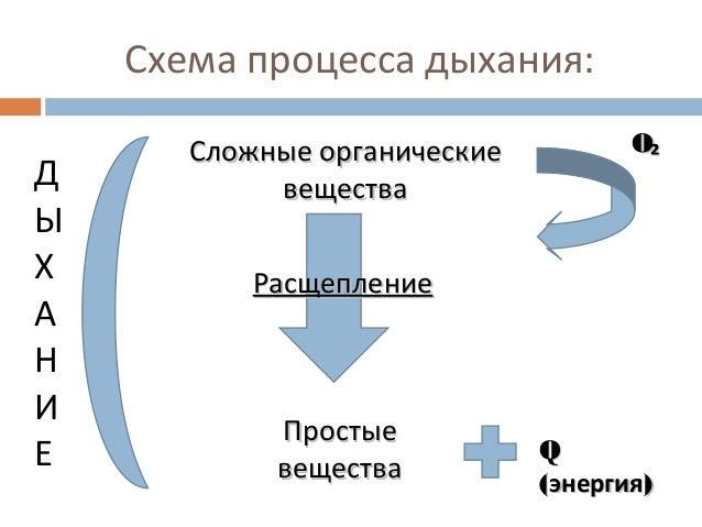 Схема процесса дыхания: