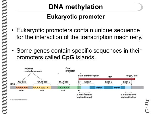 Gene Expression II5B-Mechanism of Transcription
