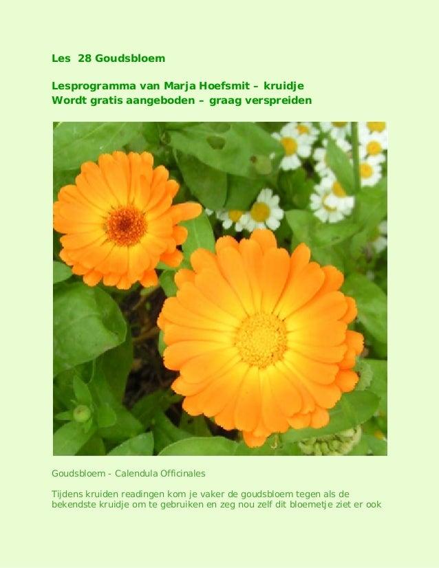 Les 28 Goudsbloem Lesprogramma van Marja Hoefsmit – kruidje Wordt gratis aangeboden – graag verspreiden  Goudsbloem - Cale...