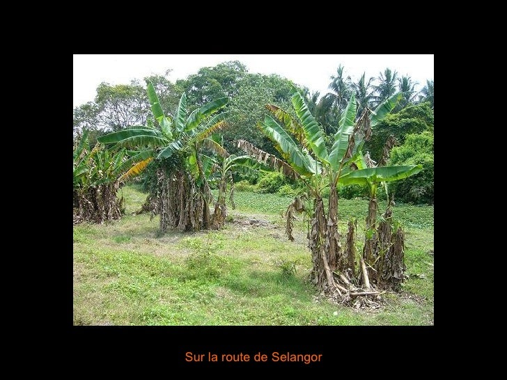 Sur la route de Selangor