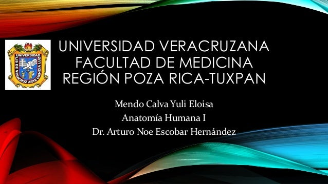 UNIVERSIDAD VERACRUZANA FACULTAD DE MEDICINA REGIÓN POZA RICA-TUXPAN Mendo Calva Yuli Eloisa Anatomía Humana I Dr. Arturo ...