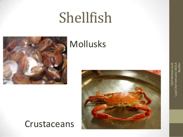 Chef Michael Scott Lead Chef Instructor AESCA Boulder  Shellfish Mollusks  Crustaceans