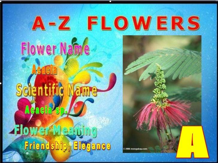 FLOWERS  A-Z       02  ACACIA