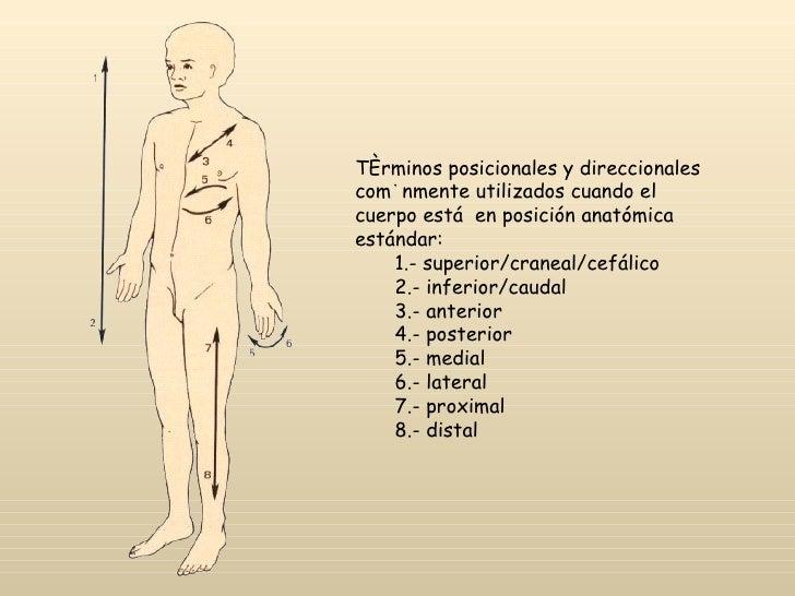 ANATOMÍA TOPOGRÁFICA - MEDICINA LEGAL Y CRIMINALISTICA