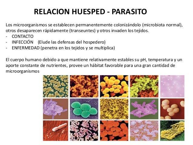 RELACION HUESPED - PARASITO Los microorganismos se establecen permanentemente colonizándolo (microbiota normal), otros des...