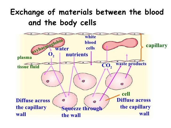types of blood vessels pdf
