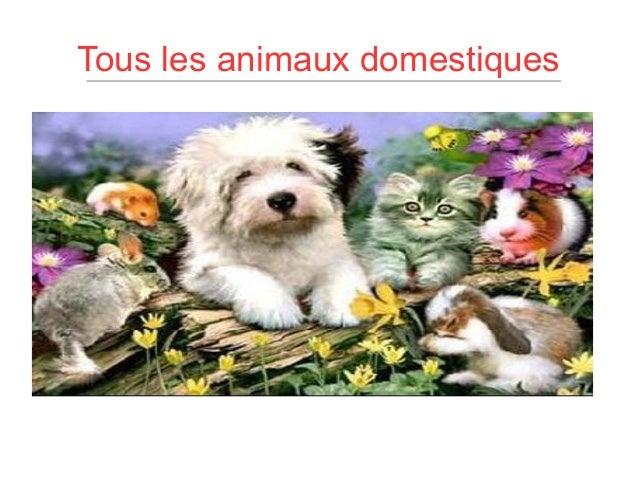 Tous les animaux domestiques