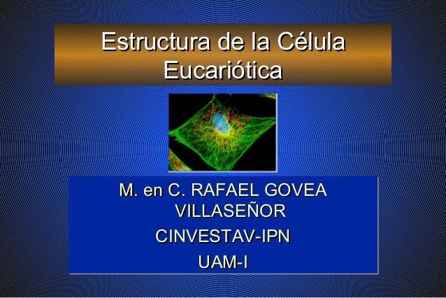 Estructura de la CélulaEstructura de la Célula EucarióticaEucariótica M. en C. RAFAEL GOVEAM. en C. RAFAEL GOVEA VILLASEÑO...