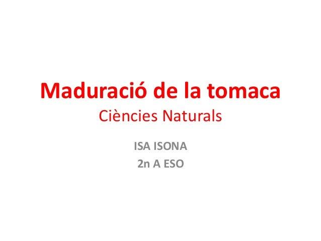 Maduració de la tomaca  Ciències Naturals  ISA ISONA  2n A ESO