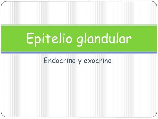 Endocrino y exocrino Epitelio glandular