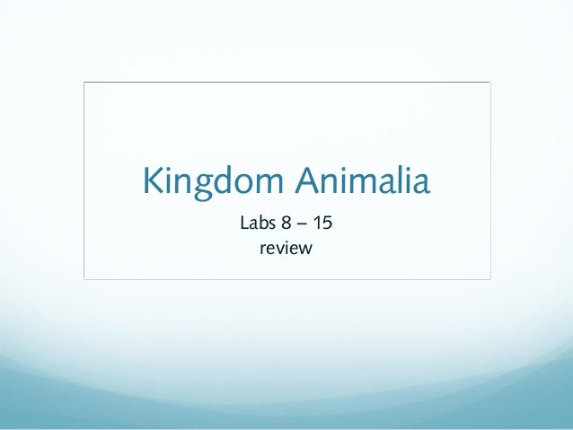 Kingdom Animalia Labs 8 – 15 review