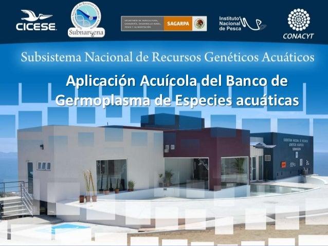 Aplicación Acuícola del Banco deGermoplasma de Especies acuáticas
