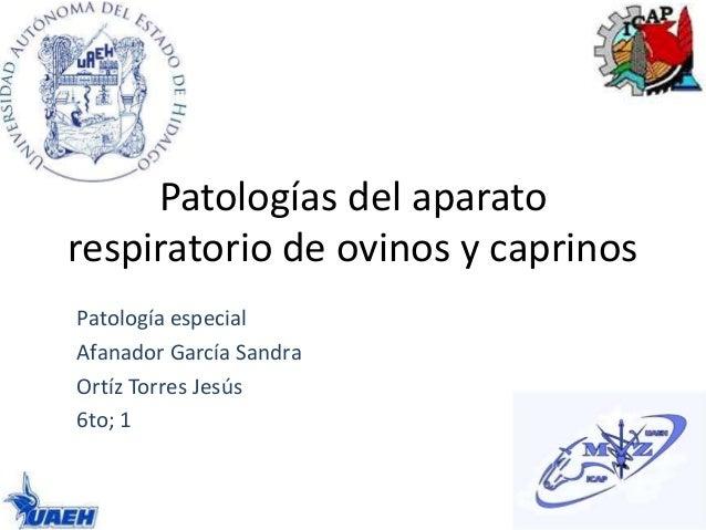 Patologías del aparato respiratorio de ovinos y caprinos Patología especial Afanador García Sandra Ortíz Torres Jesús 6to;...