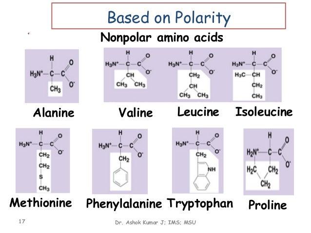 Valine Leucine Alanine Isoleucine Phenylalanine Alanine Valine Leucine