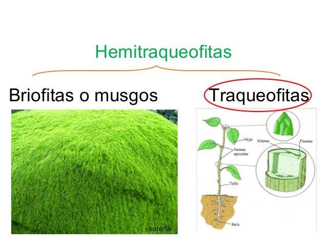 PROTISTAS Y PLANTAS