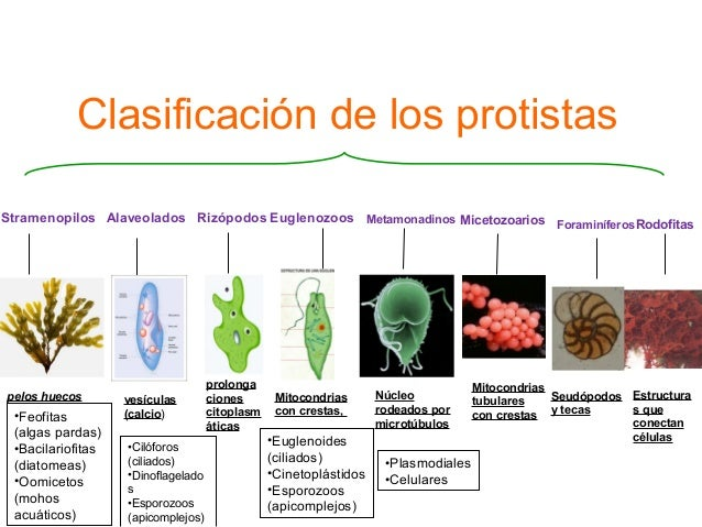 Protistas y plantas for Clasificacion de los planos arquitectonicos