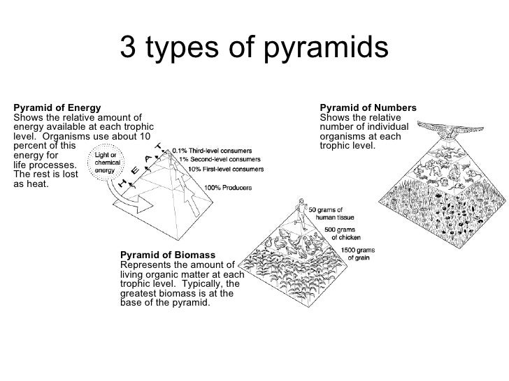 Chapter 21 Ecology Lesson 2 - Pyramid of numbers biomass_carbon cycle