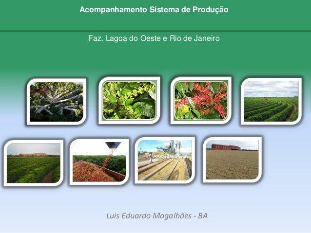 Acompanhamento Sistema de Produção  Faz. Lagoa do Oeste e Rio de Janeiro  Luis Eduardo Magalhães - BA