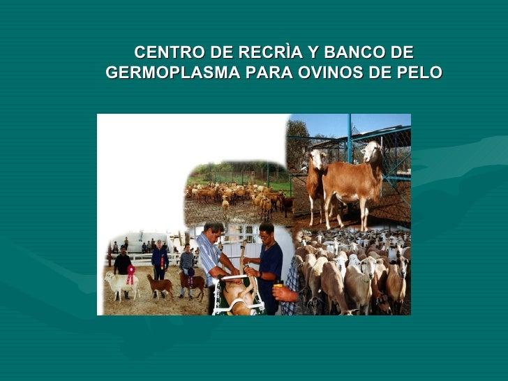 CENTRO DE RECRÌA Y BANCO DE GERMOPLASMA PARA OVINOS DE PELO