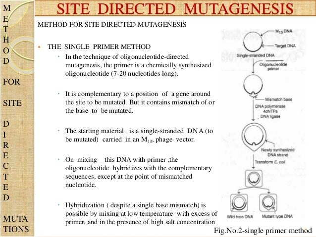 site directed mutagenesis of subtilisin One-step site-directed mutagenesis of the kex2 protease oxyanion hole brenner et al research paper 499 site mutants of subtilisin can be made and obtained.
