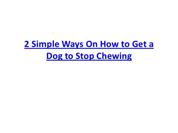 2 Simple Ways On How to Get a Dog to Stop Chewing<br />