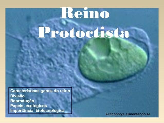 Actinophrys alimentándo-se Reino Protoctista Características gerais do reino Divisão Reprodução Papéis ecológicos Importân...
