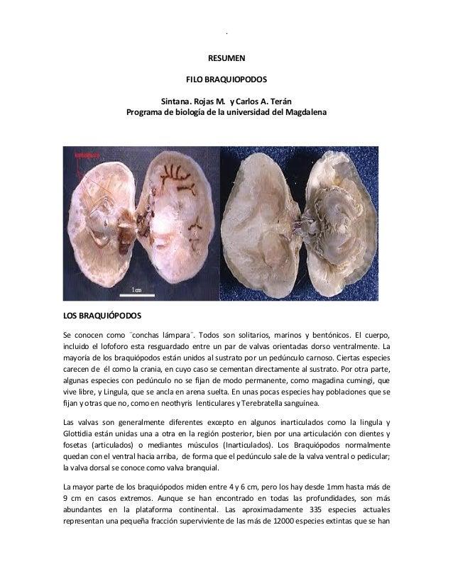 . RESUMEN FILO BRAQUIOPODOS Sintana. Rojas M. y Carlos A. Terán Programa de biología de la universidad del Magdalena LOS B...