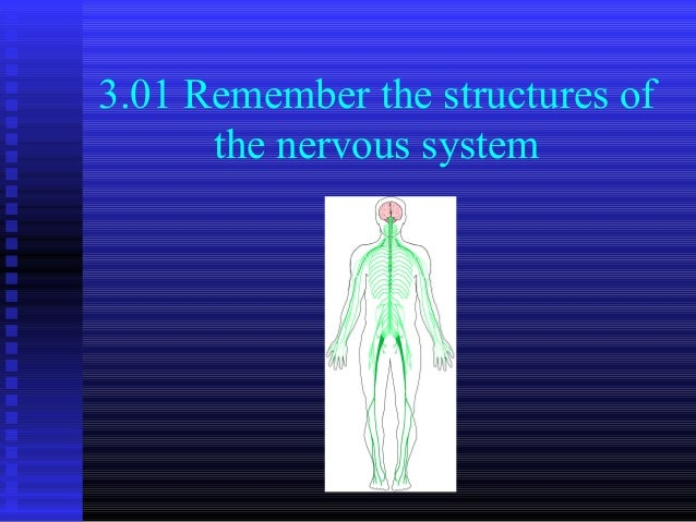 3.01 Remember the structures of      the nervous system