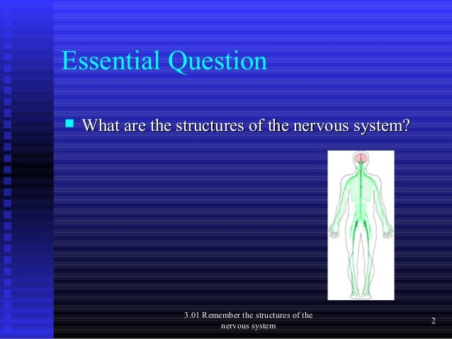 structures of the nervous system Components of the nervous system the support and structure of neurons the peripheral nervous system the nervous system 3 psy_c03qxd 2/2/05 2:39 pm page 42.