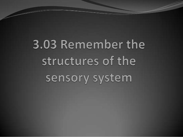 Structures of the Sensory System