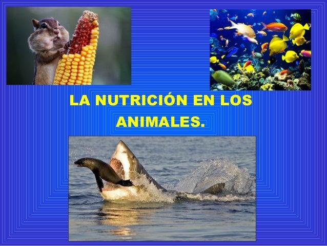 LA NUTRICIÓN EN LOS ANIMALES.