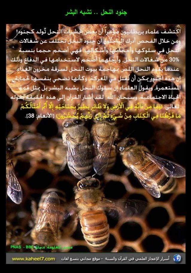 الموسوعة المصورة للإعجاز العلمي (3) 3-26-638