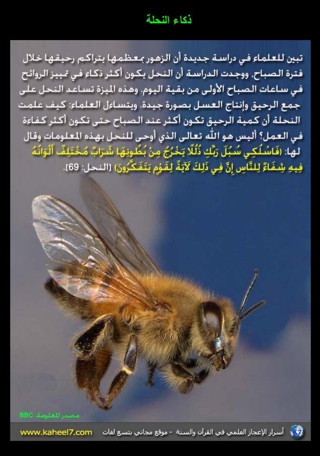 الموسوعة المصورة للإعجاز العلمي (3) 3-31-638