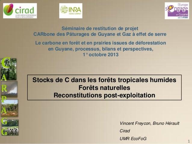 Stock de carbone dans les forêts tropicales humides